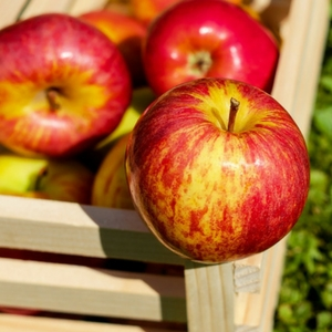 Amazing health benefits of apples